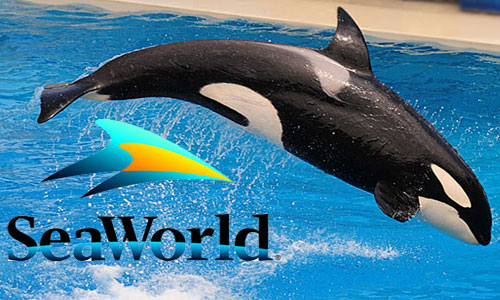 Image for Sea World